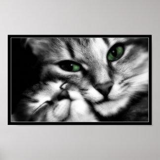 Feline Affection Poster