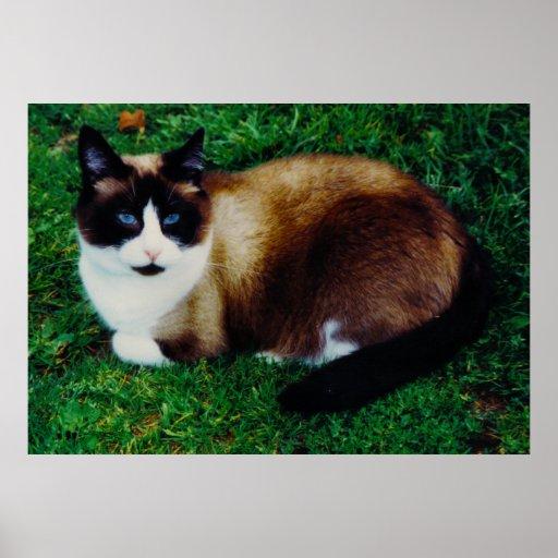 Feline Beauty Poster