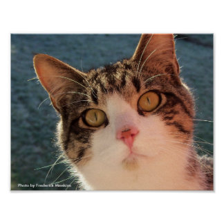Feline Gazing Poster