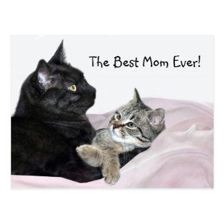Feline Mother's Day Postcard