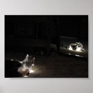 Feline Reflections Print