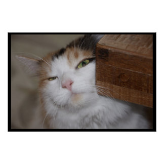 Feline Scratch Poster