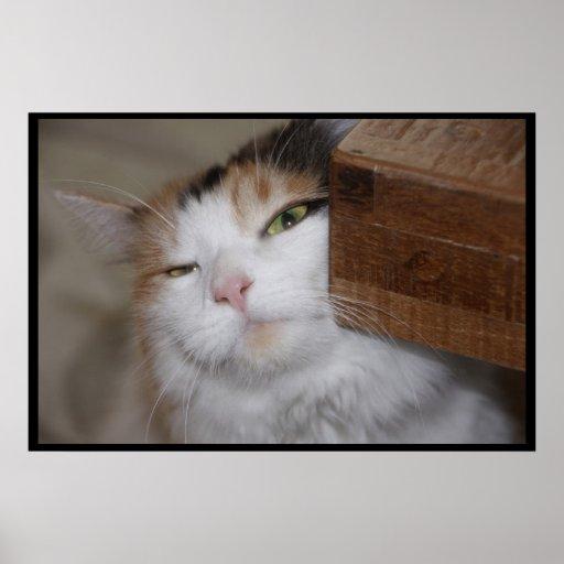 Feline Scratch Print