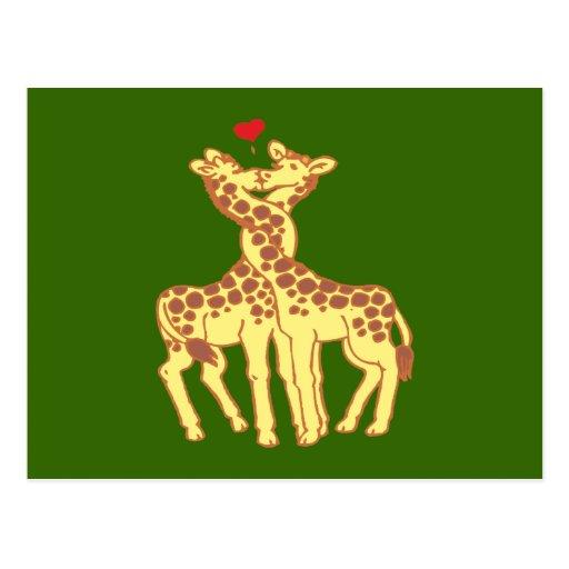 fell in love giraffes giraffes with love post card