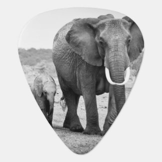 Female African elephant and three calves, Kenya. Guitar Pick
