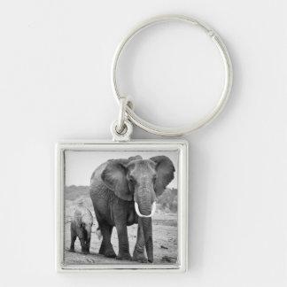 Female African elephant and three calves, Kenya. Keychains