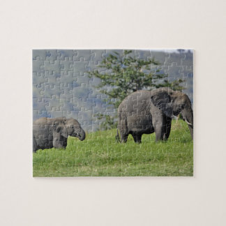 Female African Elephant with baby, Loxodonta Puzzle