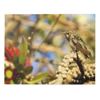 Female Anna's Hummingbird, California, Photo Notepad