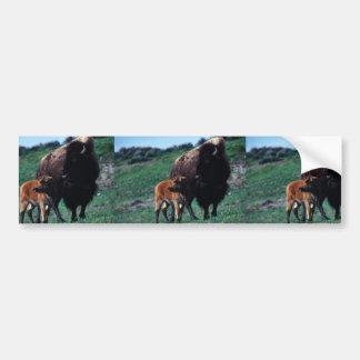 Female bison with a calf bumper stickers