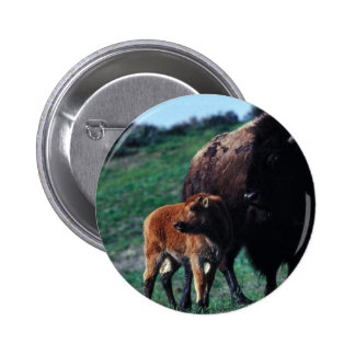 Female bison with a calf pin