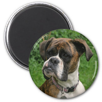 Female Brindle and White Boxer Dog Fridge Magnet Magnet
