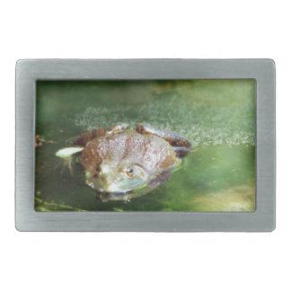 Female Bullfrog Laying Eggs Belt Buckle