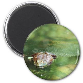 Female Bullfrog Laying Eggs Magnet