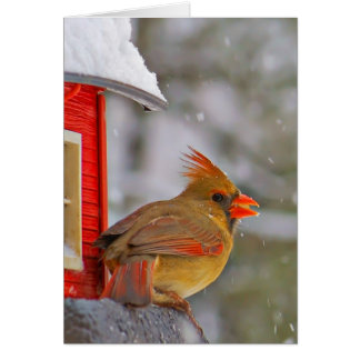 Female Cardinal at feeder Card