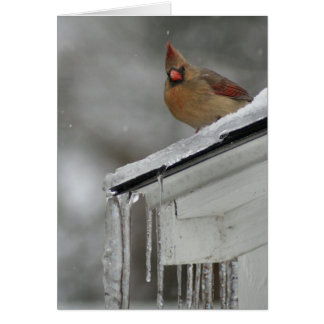 Female Cardinal Card
