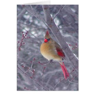Female Cardinal in Snow Card