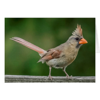 Female Cardinal Note Cards