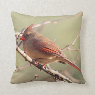 Female cardinal perched on a branch cushion
