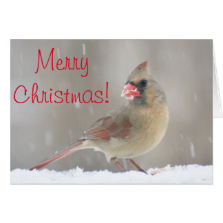 Female cardinal photo card