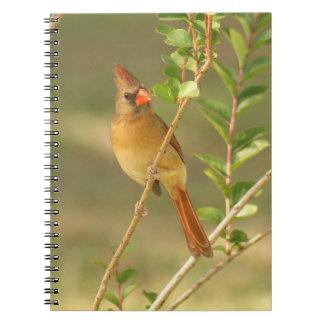 Female Cardinal Spiral Photo Notebook