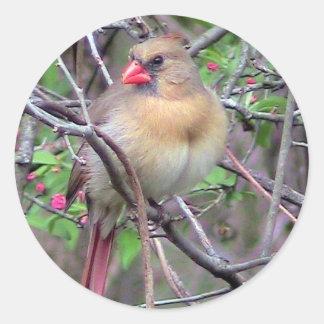 Female Cardinal (Spring) Classic Round Sticker