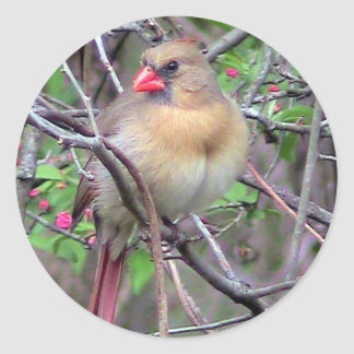 Female Cardinal (Spring) Round Sticker