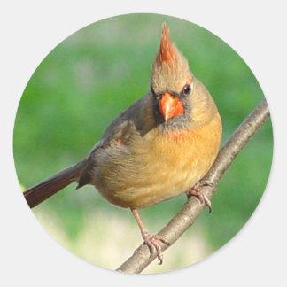 Female Cardinal Sticker