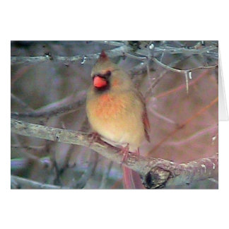 Female Cardinal ( Template)Card Card