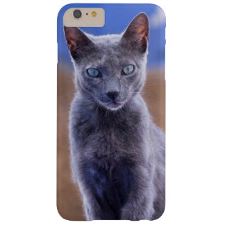 Female cat sitting, Morocco Barely There iPhone 6 Plus Case