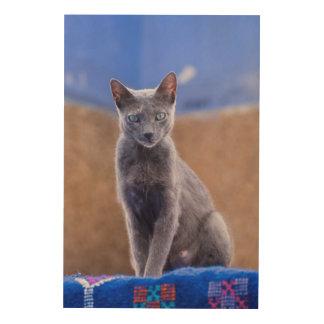 Female cat sitting, Morocco Wood Canvas