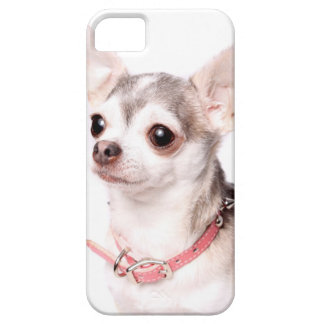 Female chihuahua with pink collar iPhone 5 cover