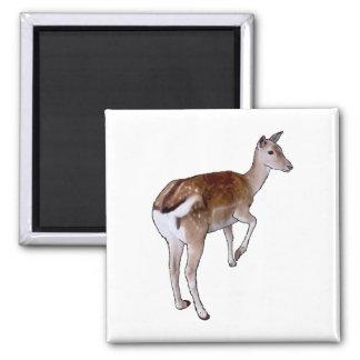 Female Deer. Square Magnet