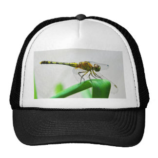Female Dragonfly Diplacodes Trivialis Hats