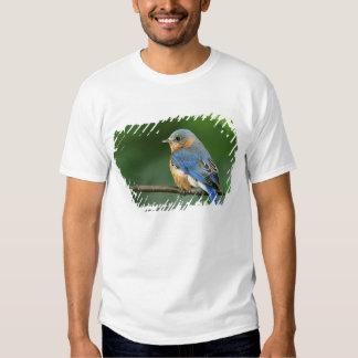 Female Eastern Bluebird, Sialia sialis T Shirts