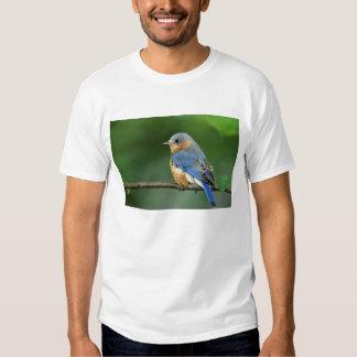 Female Eastern Bluebird, Sialia sialis Tshirt