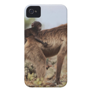 Female gelada baboon with a baby iPhone 4 cases