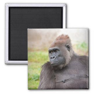 Female Gorilla Magnet
