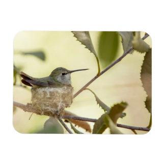 Female hummingbird on her nest rectangular photo magnet