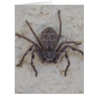 Female_Huntsman_Spider,_Big_Greeting_Card. Big Greeting Card