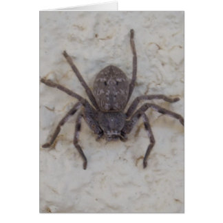 Female_Huntsman_Spider,_Greeting_Card. Greeting Card