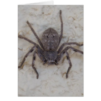 Female_Huntsman_Spider,_Note_Greeting_Card. Note Card
