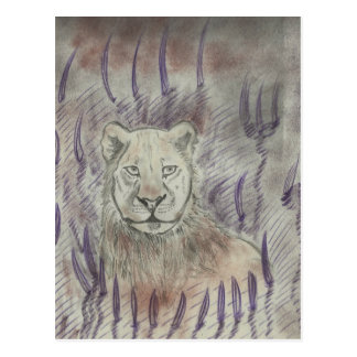 Female Lion Drawing Postcard