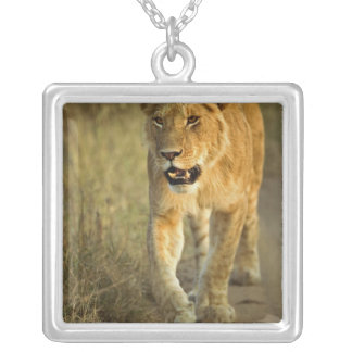 Female Lion walking at sunset, Masai Mara, Silver Plated Necklace