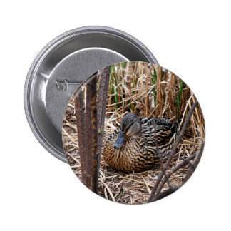 female malard duck buttons