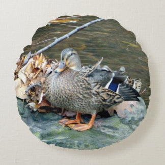 Female Mallard Duck (on Rock) Round Pillow
