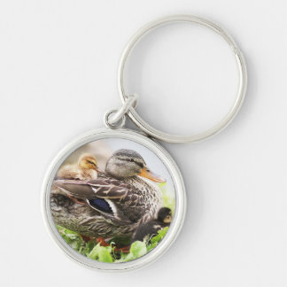 Female Mallard Surrounded By Ducklings Silver-Colored Round Key Ring