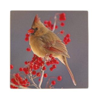 Female Northern Cardinal among hawthorn Maple Wood Coaster
