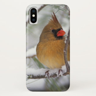 Female Northern Cardinal in snowy pine tree, iPhone X Case