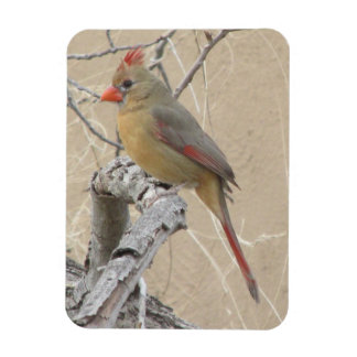 Female Northern Cardinal Magnet