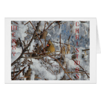 Female Northern Cardinal & Snowy Tree Card